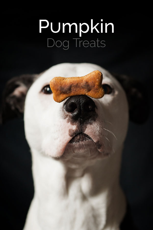 EASY Pumpkin Dog Treats! These pumpkin dog treats are simple to make and full of wholesome ingredients. #dogtreats #pumpkindogtreats #bearplate